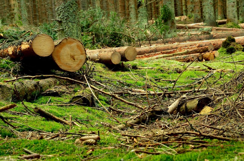 a scattered tree logs