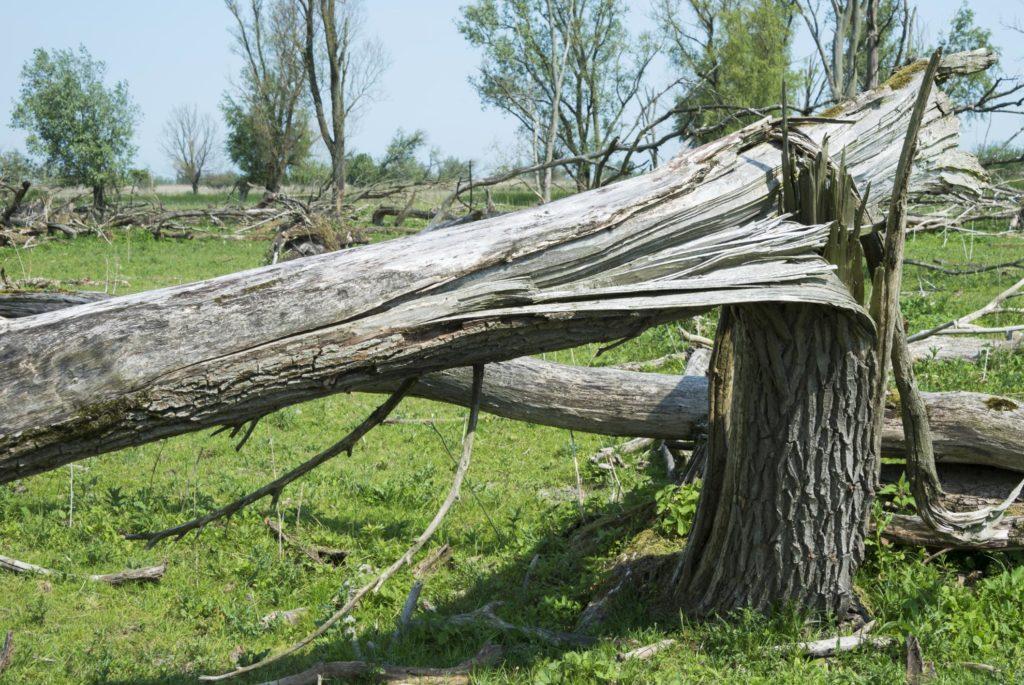 a broke tree trunk