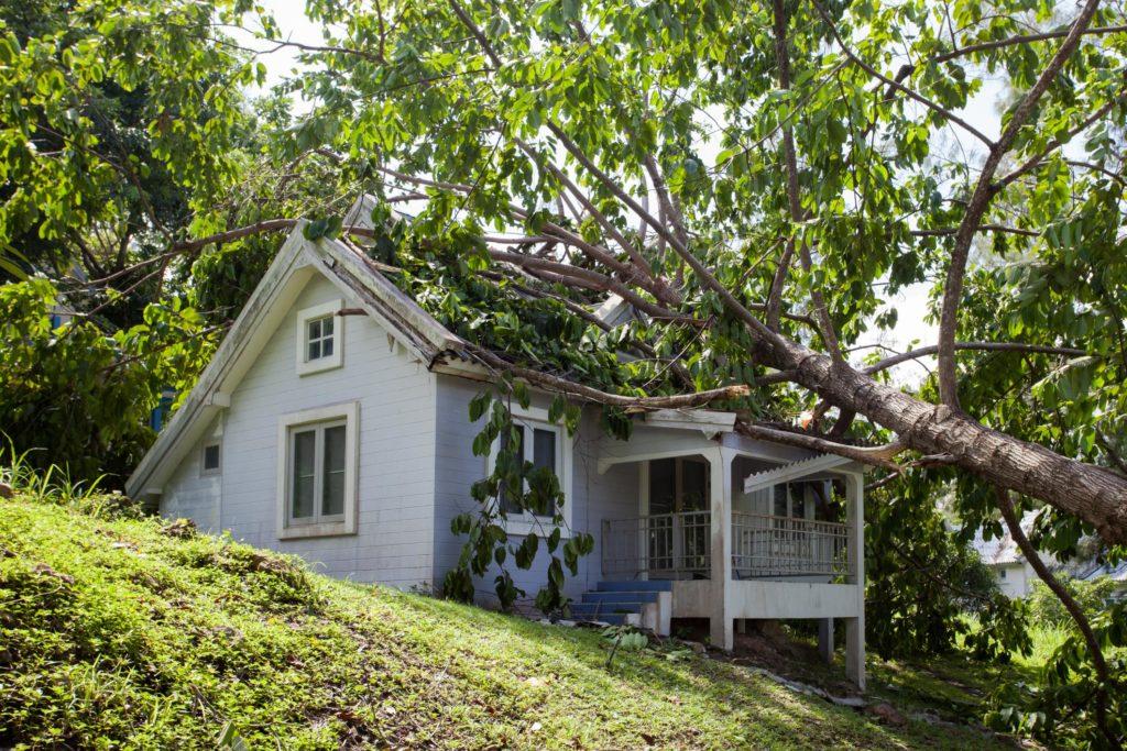 a tree fell on the house