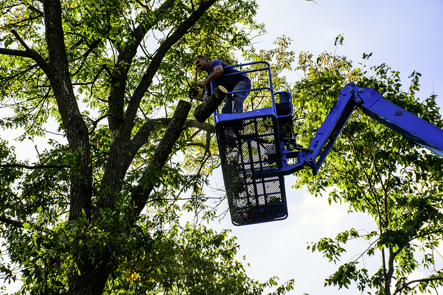 man on aerial platform trimming tree with chainsaw